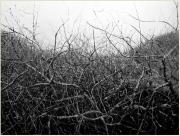 Cradle - 66x88 - 2010